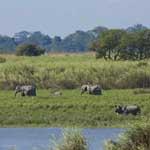काजीरंगा राष्ट्रीय उद्यान (1985)